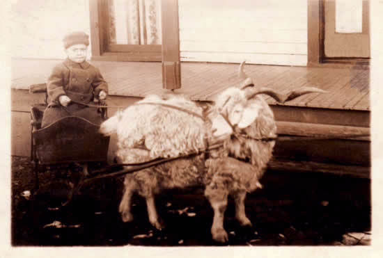 Freer's Goat Cart